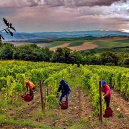 Valpolicellas natursköna vingårdar